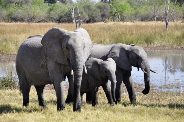 Elephants Murchison Falls Uganda safari