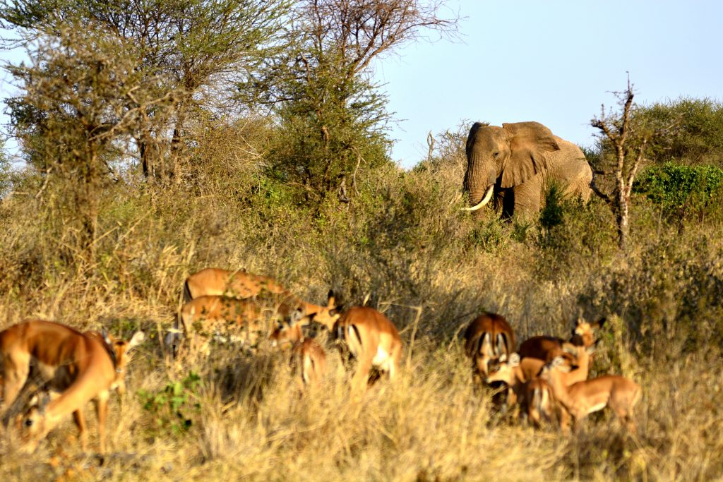 Queen Elizabeth safari Uganda