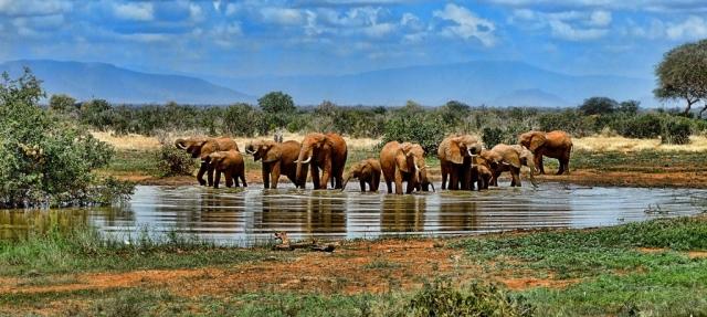 elephants safari Uganda