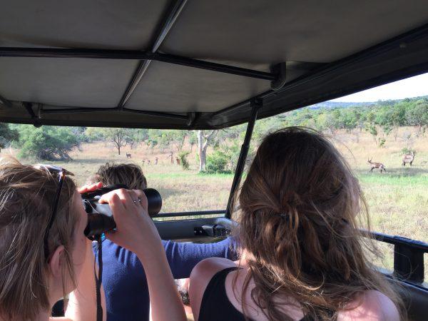 Akagera National park impala