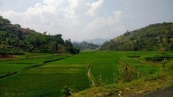 Congo Nile Trail plantations