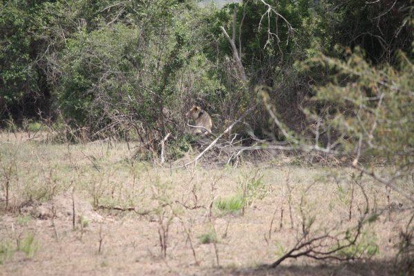 Akagara National Park Rwanda