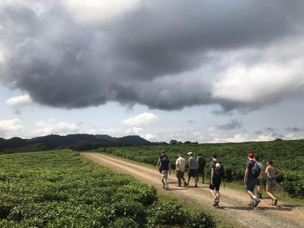 Nyungwe Rwanda